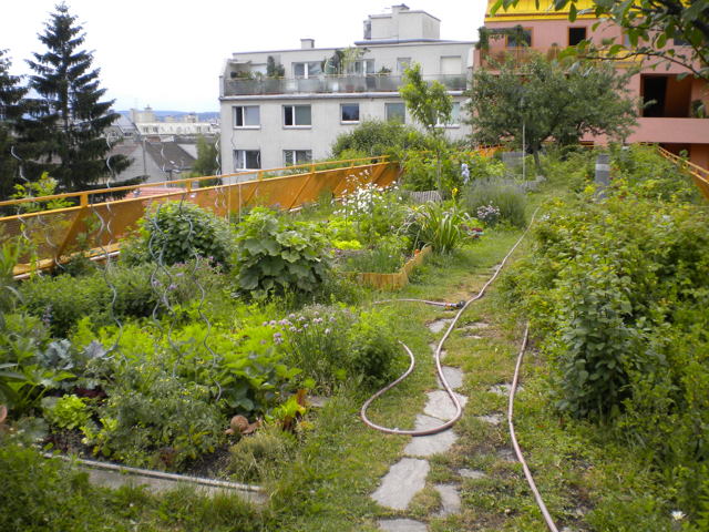 Green roof growing roof