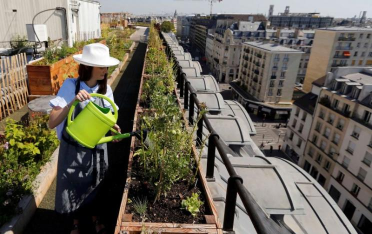 Charlotte Arnoux, recruitment officer and first-time gardener, waters plants on the 700 square metre (7500 square feet) rooftop of the Bon Marche, where the store's employees grow some 60 kinds of fruits and vegetables such as strawberries, zucchinis, mint and other herbs in their urban garden with a view of the capital in Paris, France, August 26, 2016.  REUTERS/Regis Duvignau
