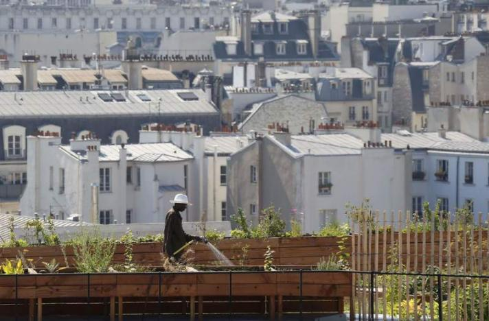 A man waters plants in planter boxes on  the 700 square metre (7500 square feet) rooftop of the Bon Marche, where the store's employees grow some 60 kinds of fruits and vegetables such as strawberries, zucchinis, mint and other herbs in their urban garden with a view of the capital in Paris, France, August 26, 2016. REUTERS/Regis Duvignau