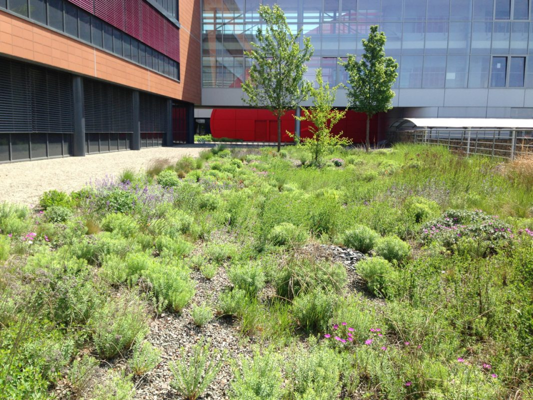 Brno-University-Green-Roof1