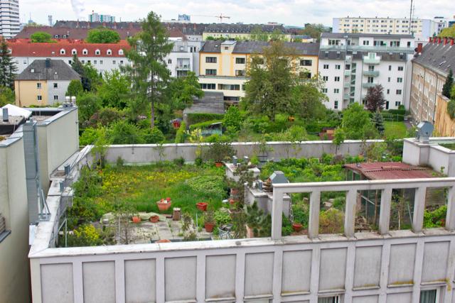 green-roof-linz-austria-1